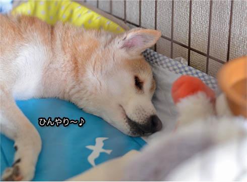 10日ブログ7.jpg